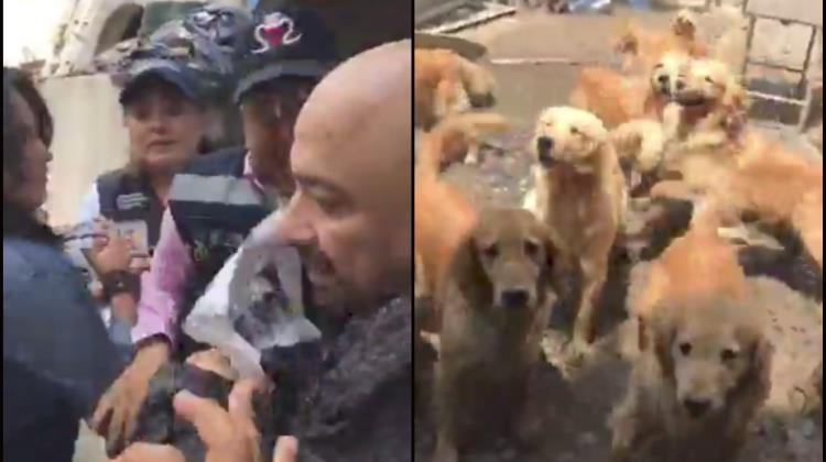 Hallan criadero clandestino de Golden Retriever (Video)