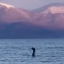 ¿Encontraron al monstruo del Lago Ness? (VIDEO)