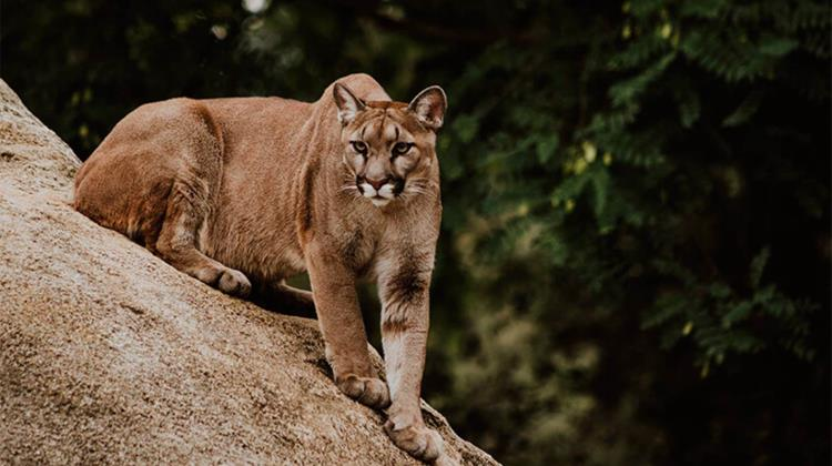 Canal Once transmite documental del territorio puma en Actopan