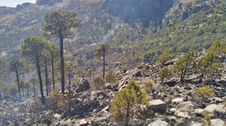 Logran extinguir incendio forestal en Cofre de Perote